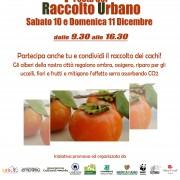 raccolto_volantino